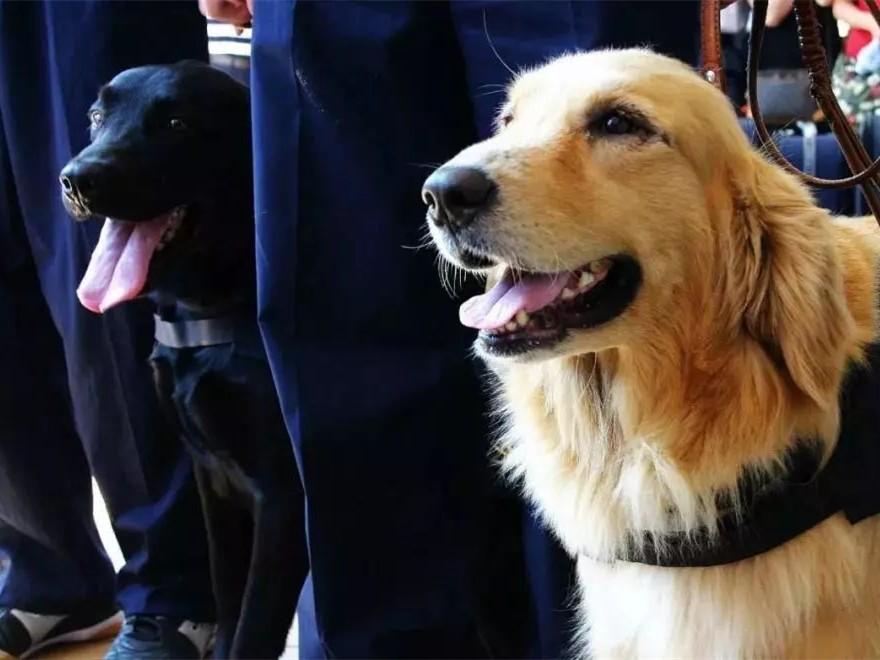 """这笔生意划算吗?1条淘汰犬卖出33万,""""考编""""失败还被抢光"""