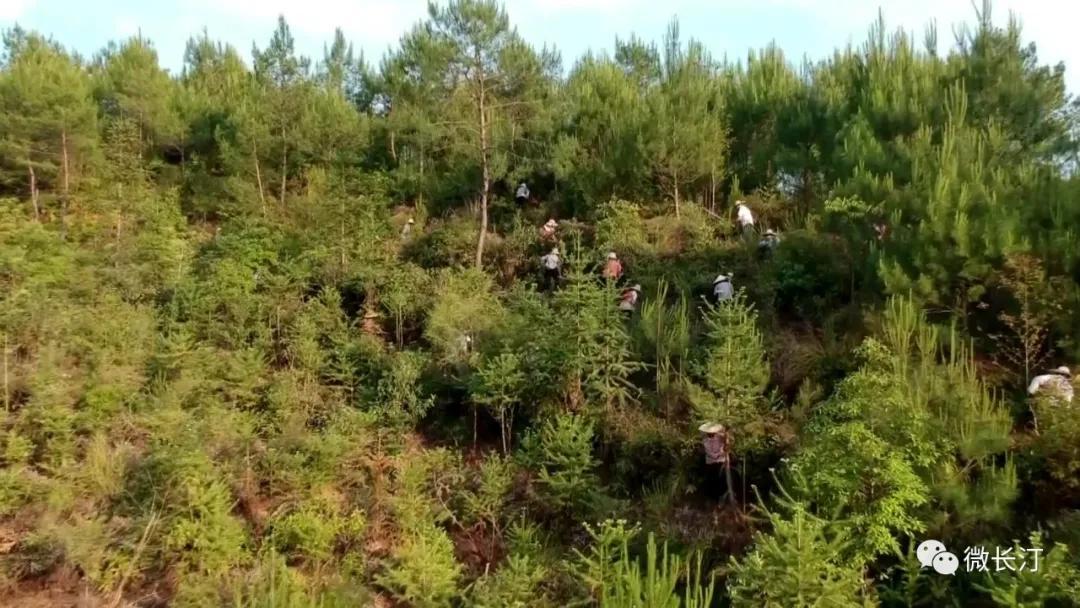 法治助力长汀县生态文明建设!汀州说法第18期精彩视频图文推送