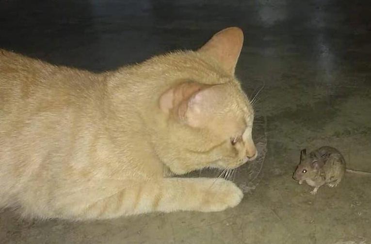 流浪橘猫备受同伴排挤,只能与老鼠蟑螂做朋友