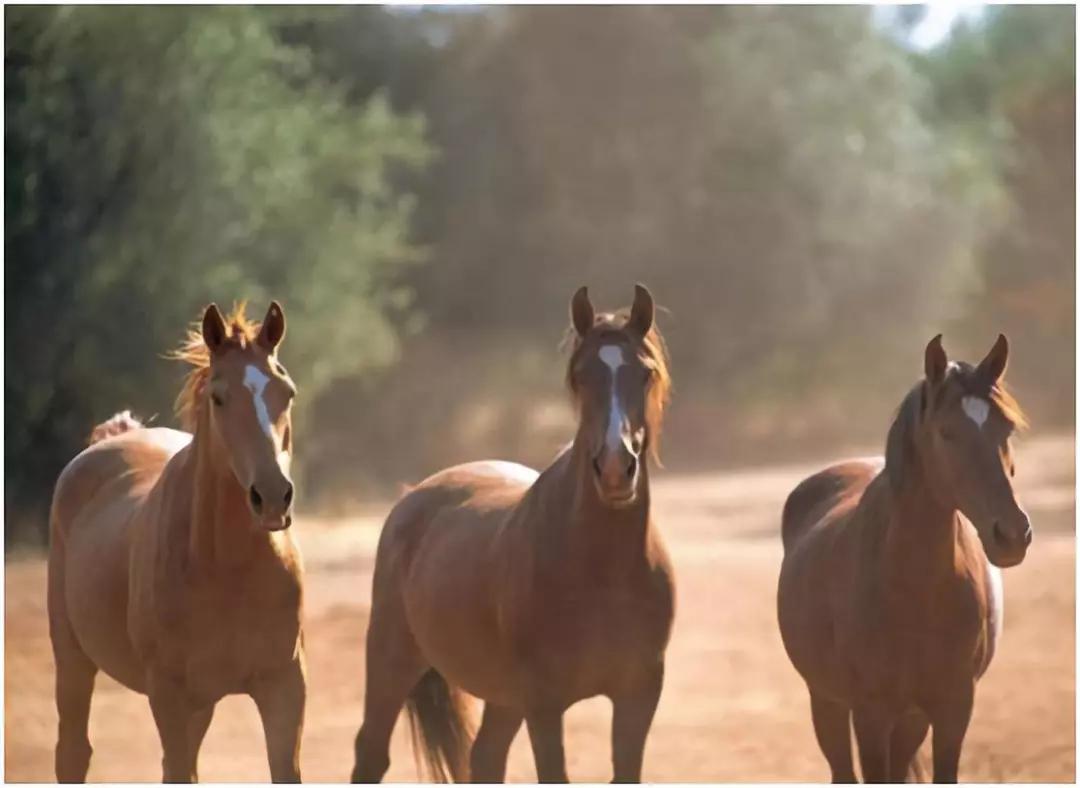 参观北加州的野马保护区会让你大吃一惊