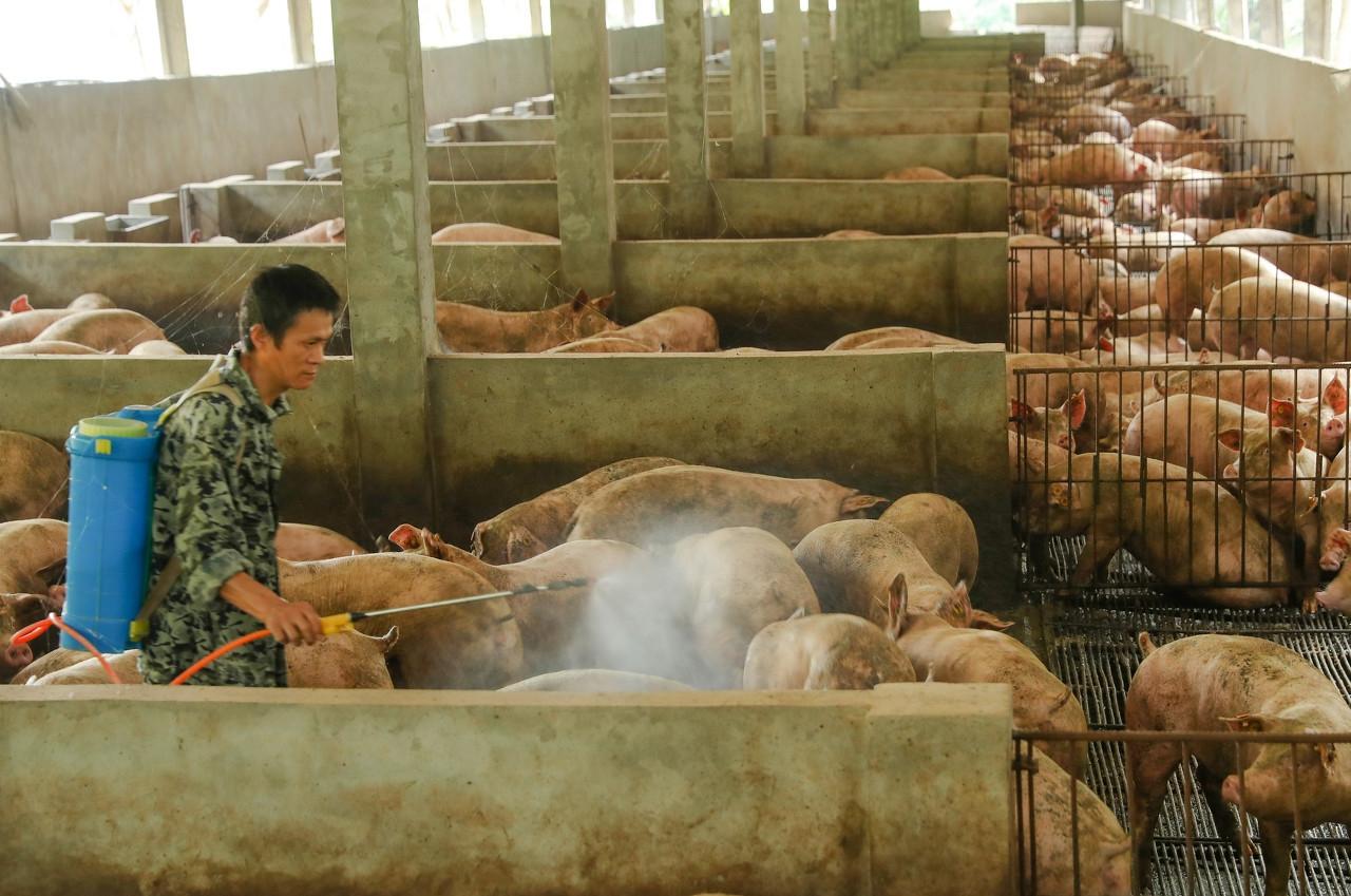 1000元/头、跨市调剂——浙江省最新养猪补贴新政策
