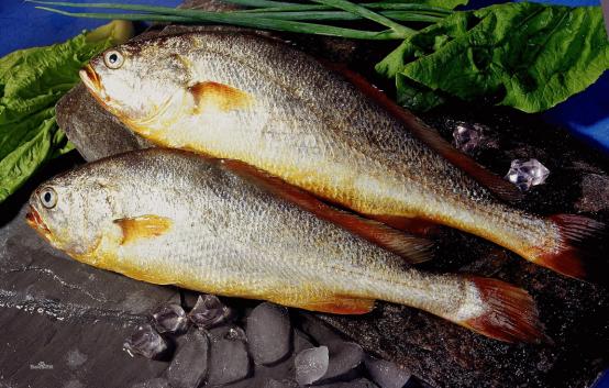 鱼身上的2种神奇石头,有人当药吃,有人做成饰品戴身上
