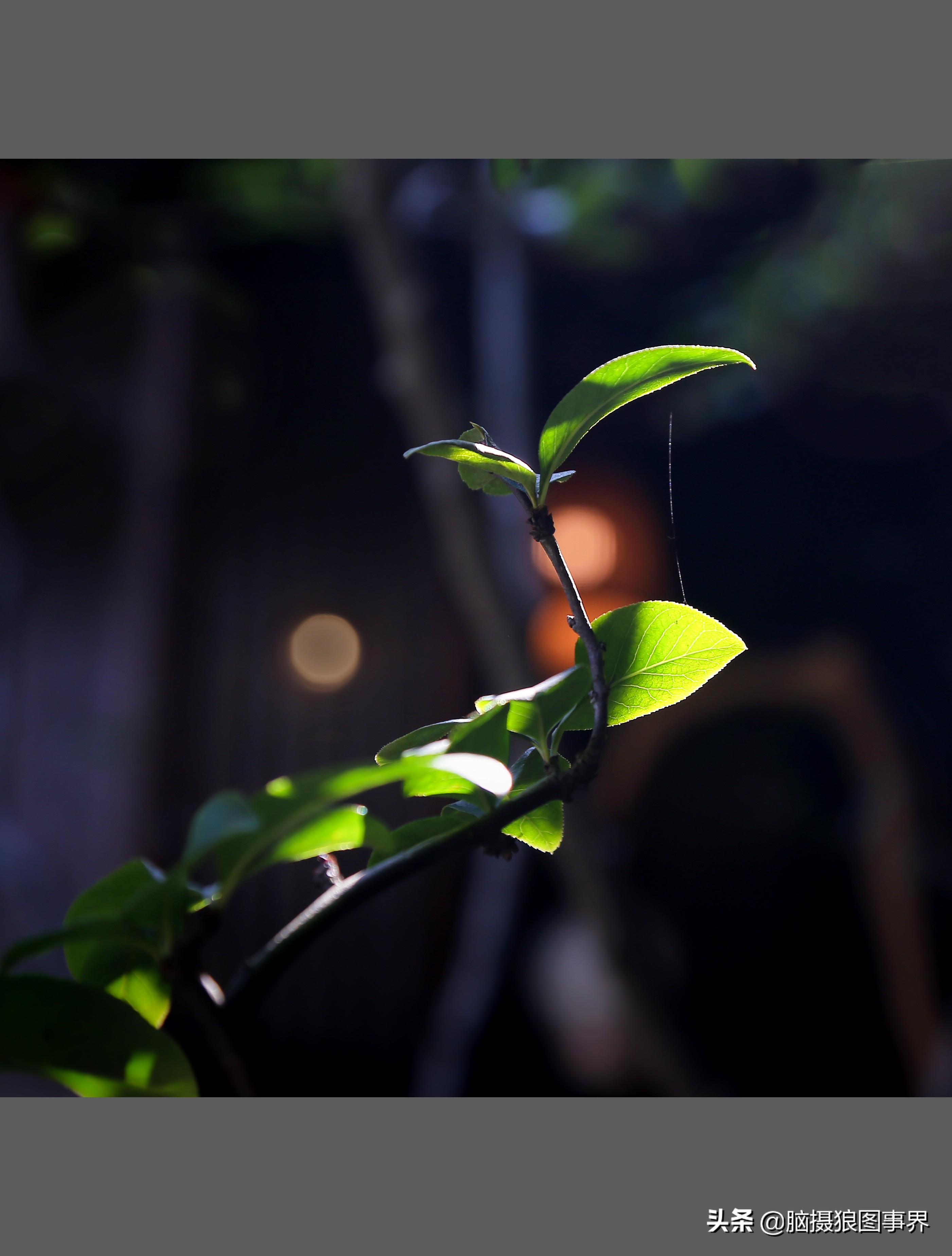 15张逆光摄影作品,能否体现出光影的魅力,你有什么建议?