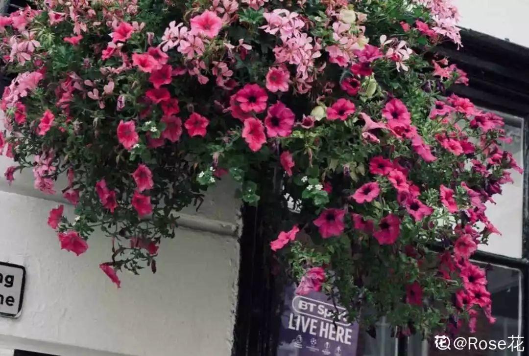 6个养花实用小窍门,业余爱好者的秘籍,养好花并不难 养花小窍门 第34张