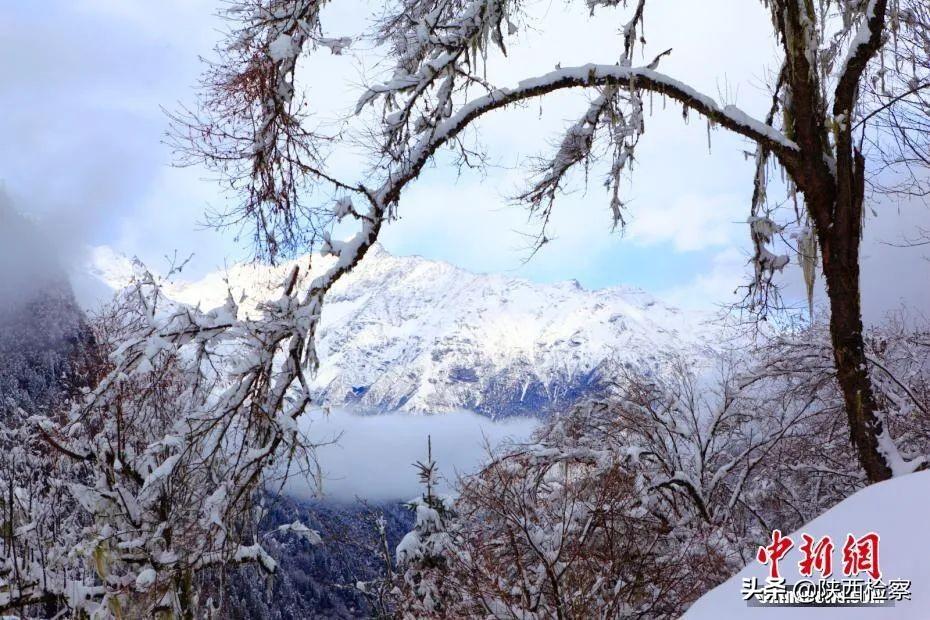 今日小雪 | 愿你今冬一切安好