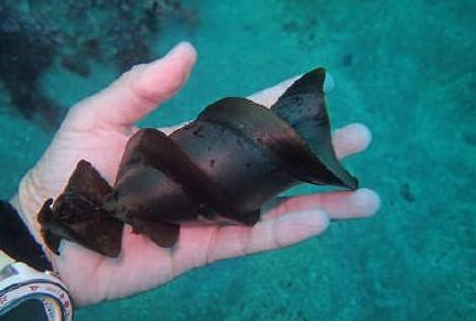 涨知识,原来鲨鱼的卵长这样?