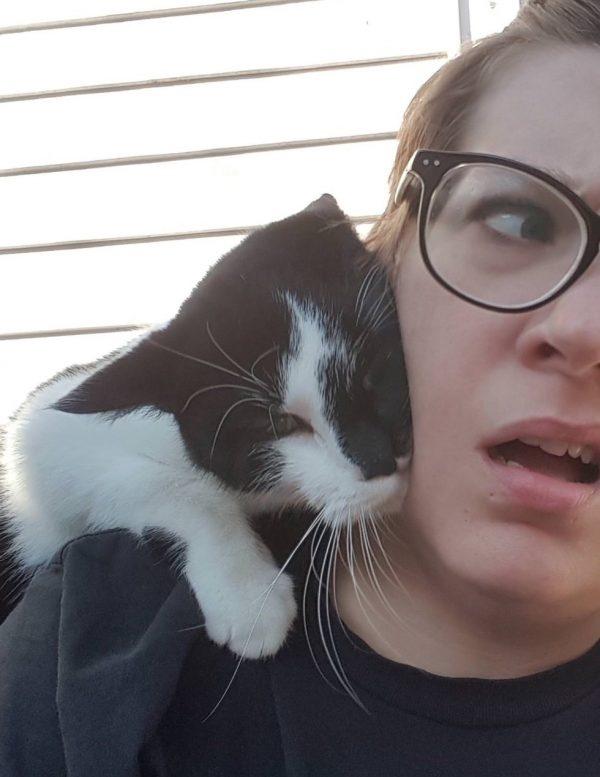 """当猫对你做这个动作时,有想跟你""""拜把子""""的意思"""