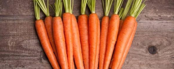 胡萝卜种植技术及管理