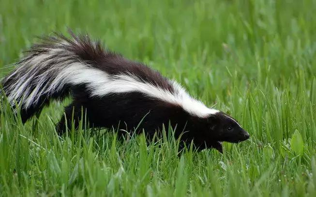 冬眠动物有哪些动物,看看10种冬眠的动物