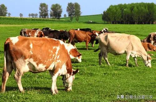 农村有什么养殖项目既赚钱,又稳定,而且投资小?