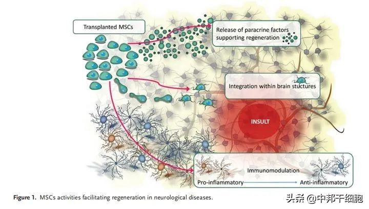 干细胞有效治疗阿尔兹海默症