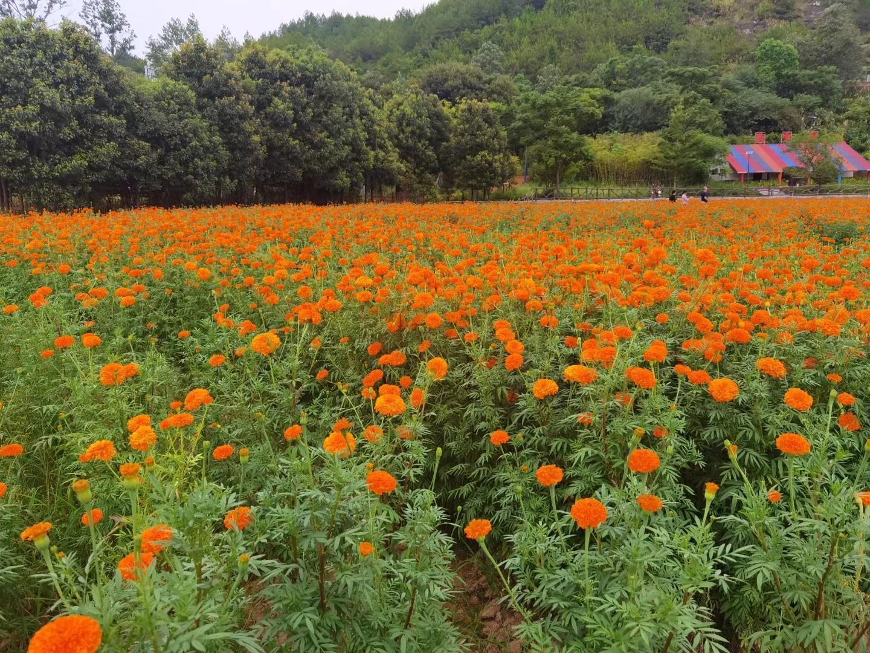 想不到 赣州有一个台湾部落民俗文化村  不一样风景 让人陶醉