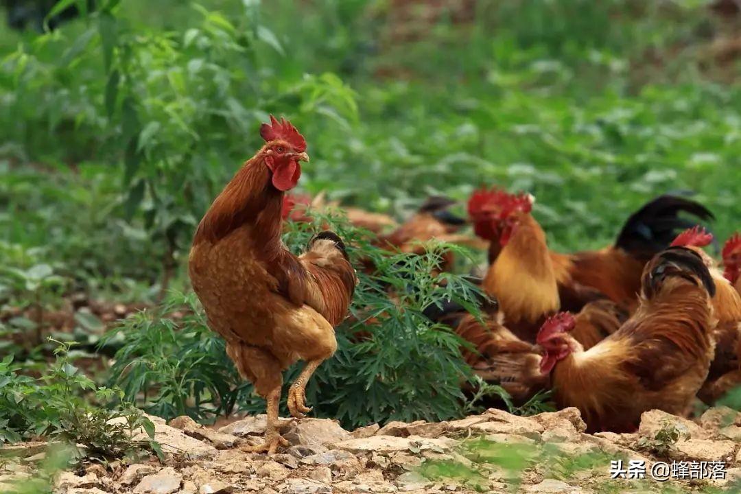 养殖业什么最赚钱农村(什么养殖业比较靠谱挣钱)插图(5)