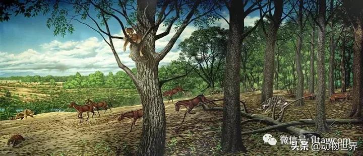 剑齿虎可不是单一的物种,它们是大家族
