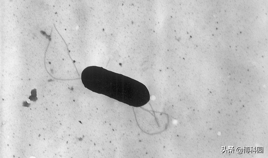 仅美国就有100万人感染沙门氏菌,现在终于能快速检测到了