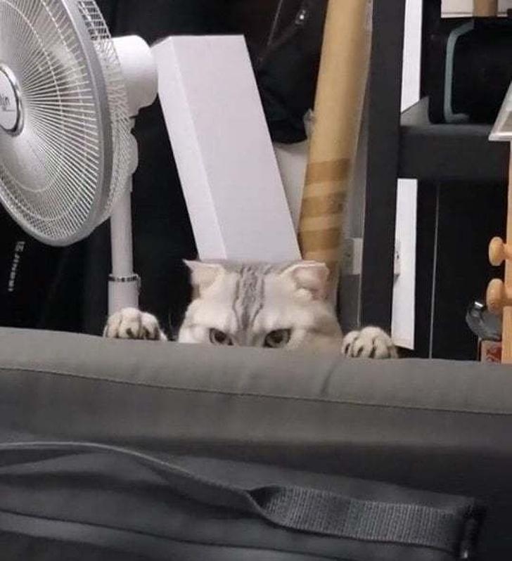 20張貓咪搞笑圖片,說出來你們可能不信,我被一只貓給鄙視了