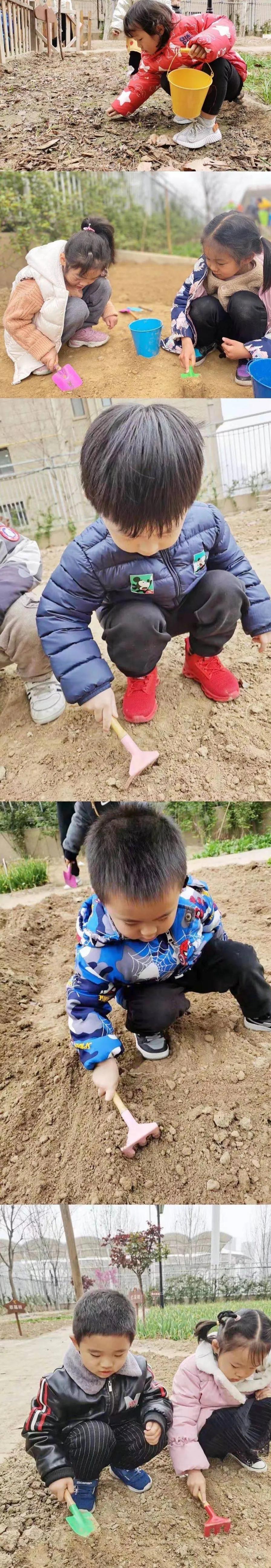 五龙新城汇爱幼稚园丨在城市中央种一片田,亲近土地,回归自然