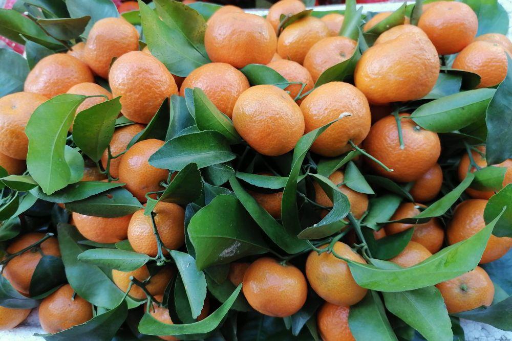 """买砂糖橘怎么挑选?水果店老板教你,按""""5点""""来选,无渣还多汁"""