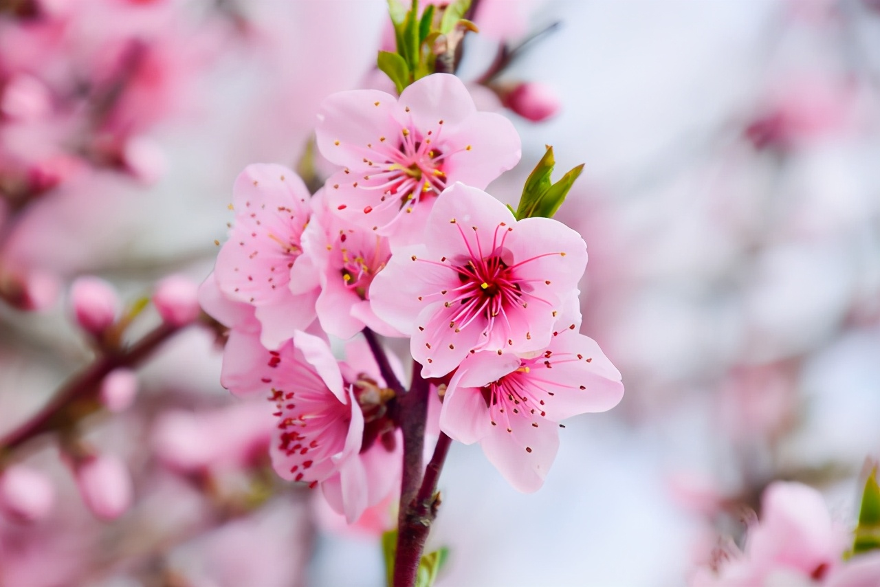 周末走起!苏州这些赏花好去处很多人还不知道!各种花海美翻了