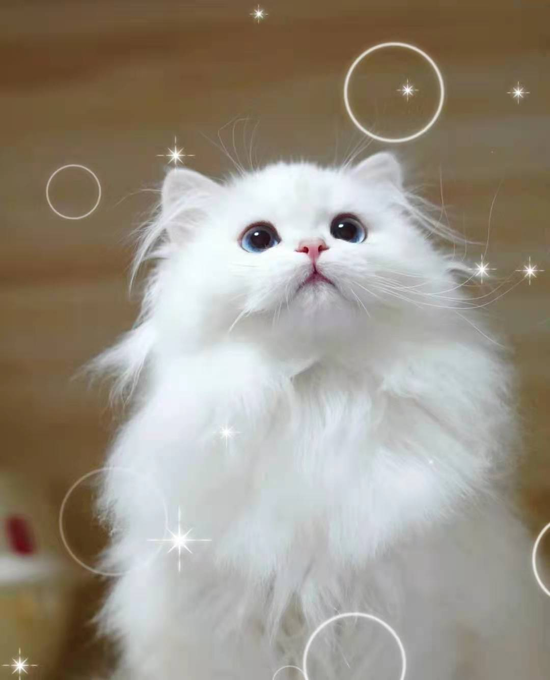猫咪生病的迹象,看懂前兆比治病更重要