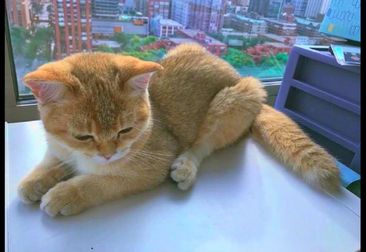 猫咪趴在桌子上,后腿越看越像是烤鸡腿,猫:你怎么流口水了?