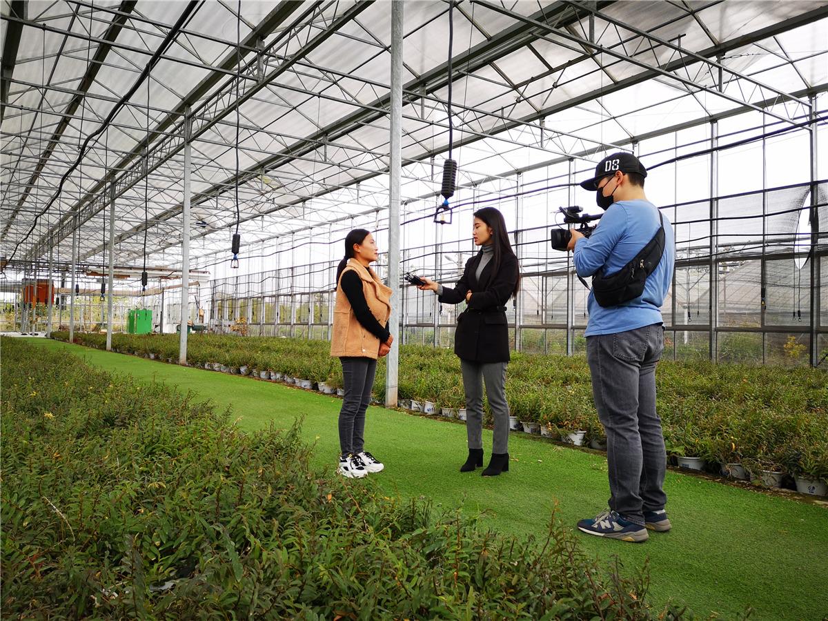 """喜讯!安徽卫视专访铁皮石斛,称它为""""软黄金"""""""