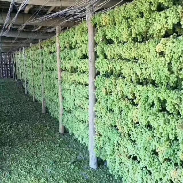 吐鲁番的葡萄干如何晾晒而成_怎样分辨葡萄干的好坏