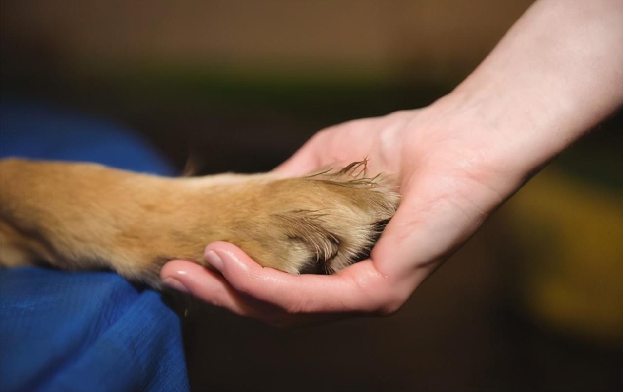 在狗狗眼中,主人摸它的爪子,是想干这几件事