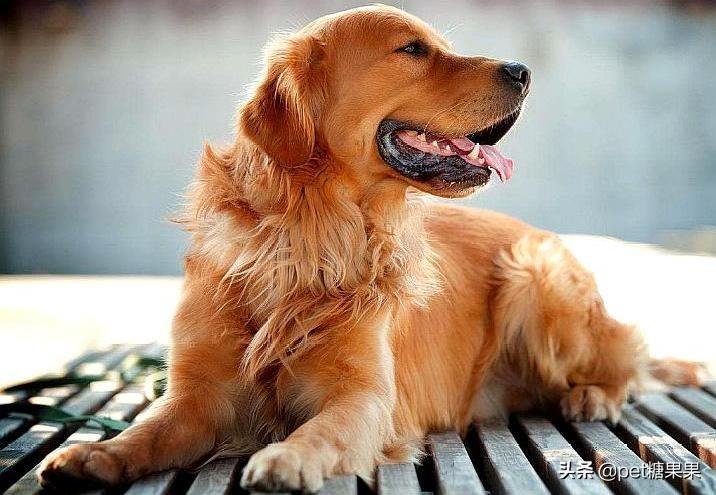 狗狗發情期的注意事項,公狗和母狗發情有什麽區別?