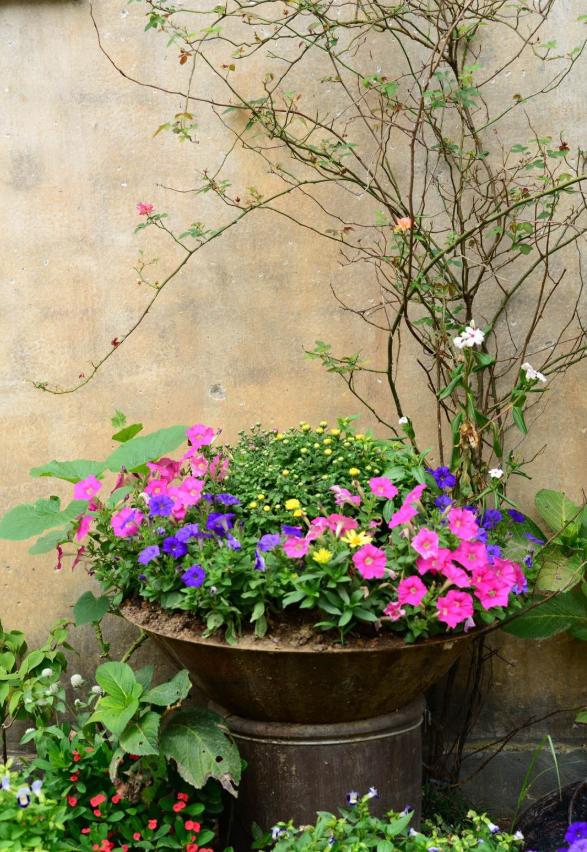 10个养花常识,杜绝黄叶落叶,花儿蹭蹭长 家务卫生 第13张