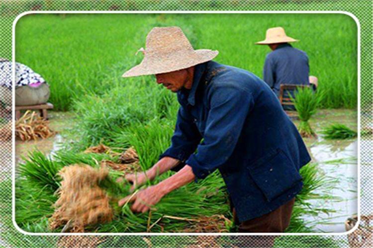 50岁农村人出门打工没人要,又不会做生意,还有哪些挣钱途径?
