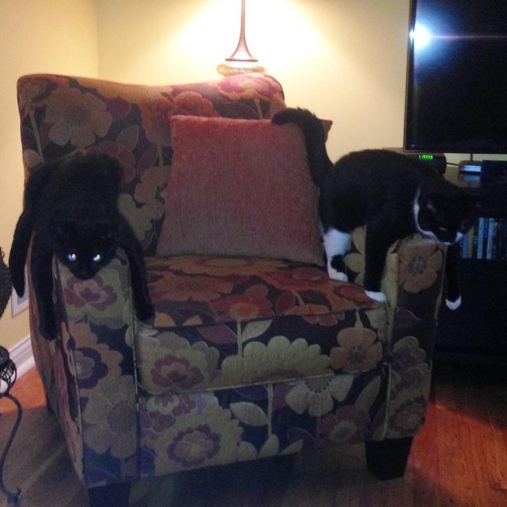 22張貓咪的搞笑圖片:喵星人到底能可愛到什麽程度