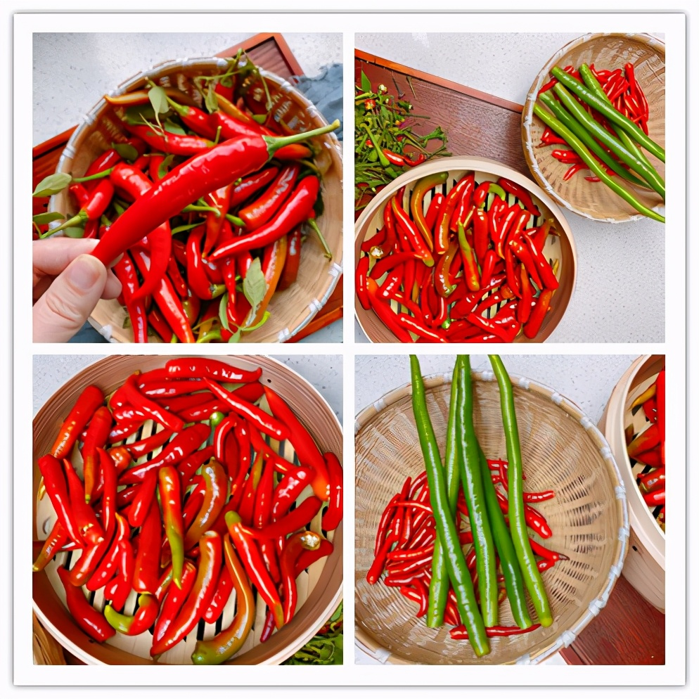 自製蒜蓉辣椒醬,掌握3點,不長白花耐保存,蒜香濃郁拌啥都香