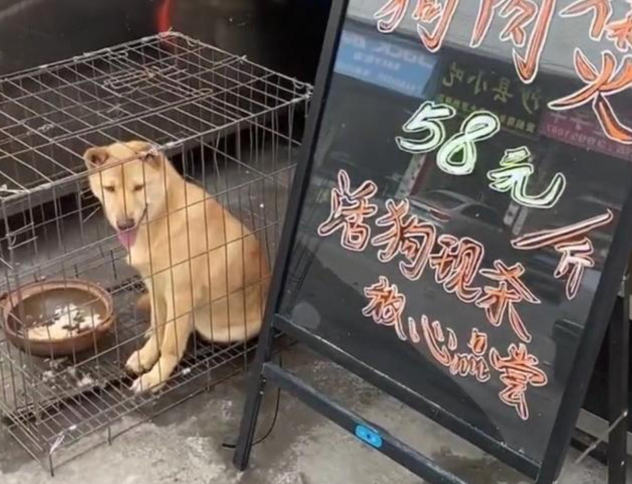 狗肉店门口的笼子里关着大黄狗,眼神里充满恐惧:能不能救救我?