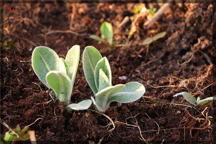 农村种植项目,这几种非常有前景,能帮助一些创业失败者东山再起
