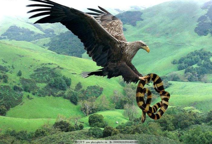 蛇在世界上的六大天敌,第一种太可怕