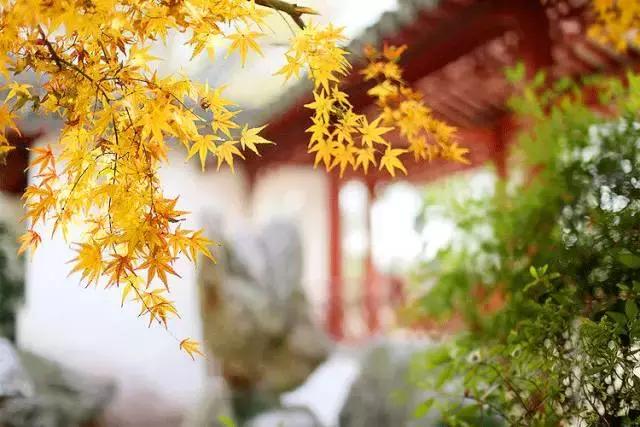 唐诗宋词里的秋天,尽揽山水风月-第10张图片-诗句网