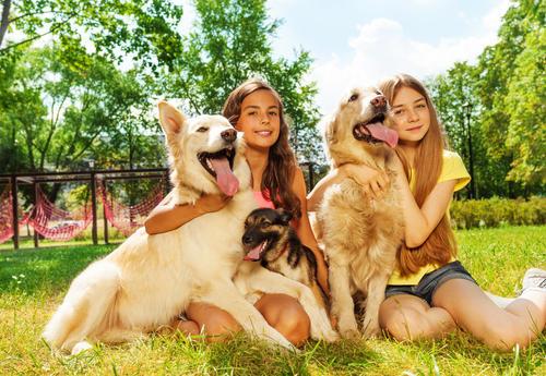 为什么狗狗更亲近女主人?原来女生这些特点,让它更喜欢