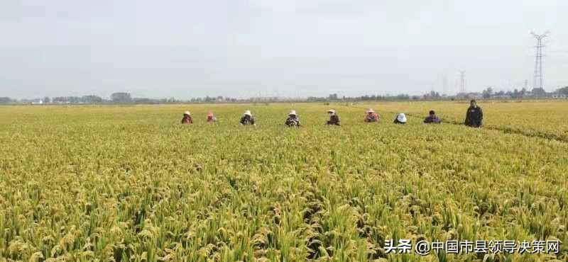 幸福的生活比蜜甜——响水县南河镇头甲村党总支为民服务纪实