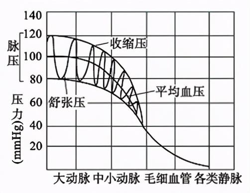 """诊室测血压高,回家测就正常?医生:别被测不准的血压""""骗""""了"""