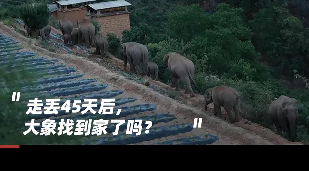对不起,大象北上的奇异之旅,根本不浪漫