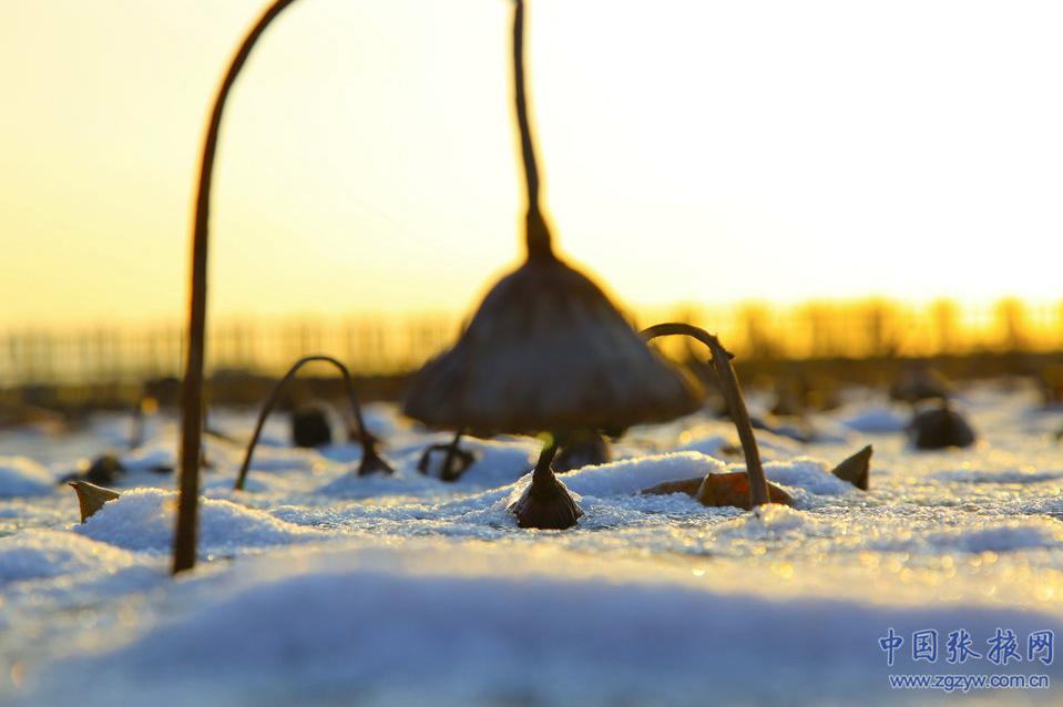 """""""冻""""真格!张掖美景与初雪撞了个满怀"""