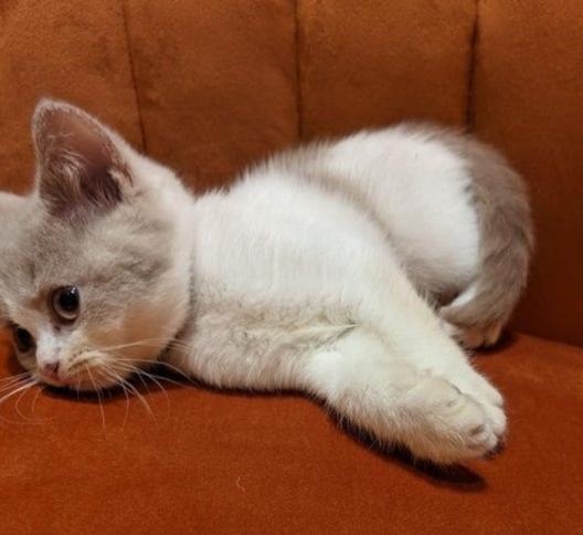 治愈系精灵小奶猫,20张图萌翻啦!还有铲屎官为奶猫做安全椅