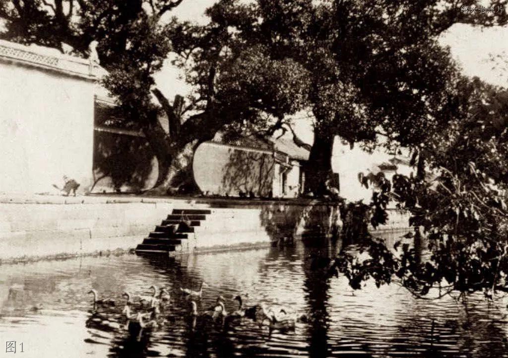 绍兴老照片:大树,儿童公园,鲁迅纪念馆,绍百,红旗食品,瓷厂