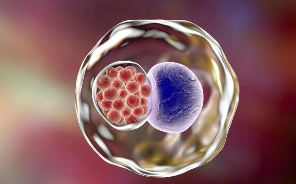 备孕半年未见动静,检查一看竟是精子畸形