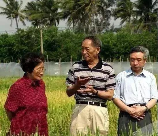 91岁奶奶是袁隆平同窗校花,毕业20年后再见,袁老:咋成老太太了