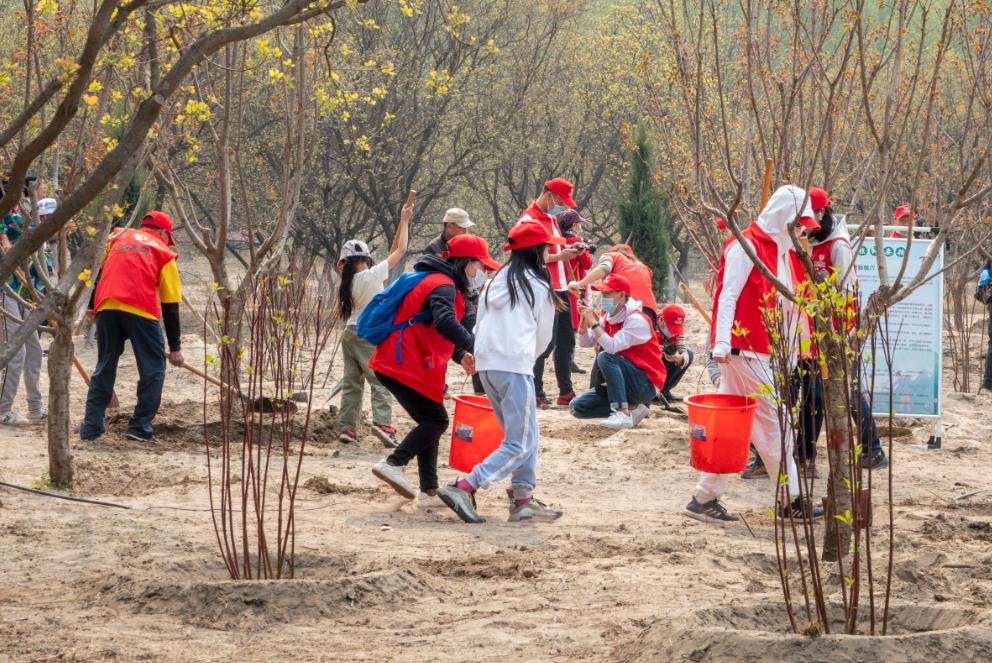 十年树木 | 多弗集团开展义务植树活动