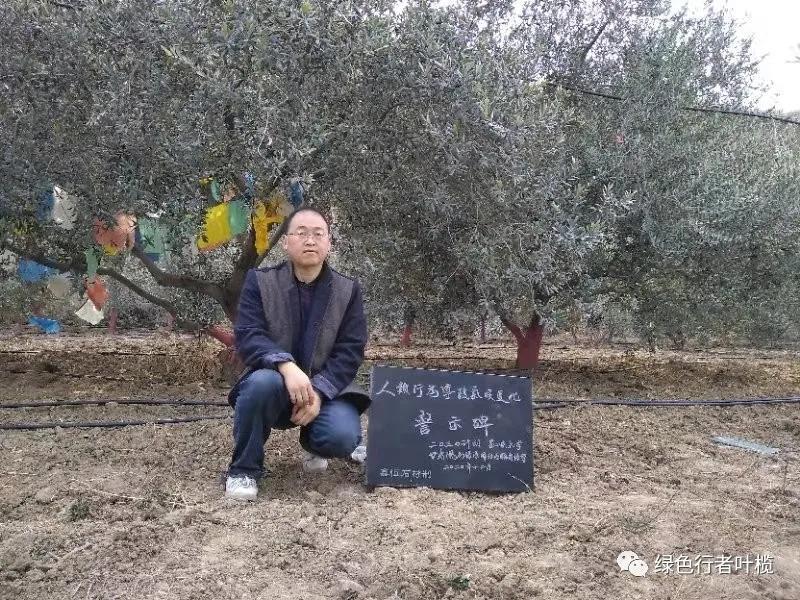 """甘肃首个""""气候变化警示碑""""亮相陇南大堡油橄榄园"""
