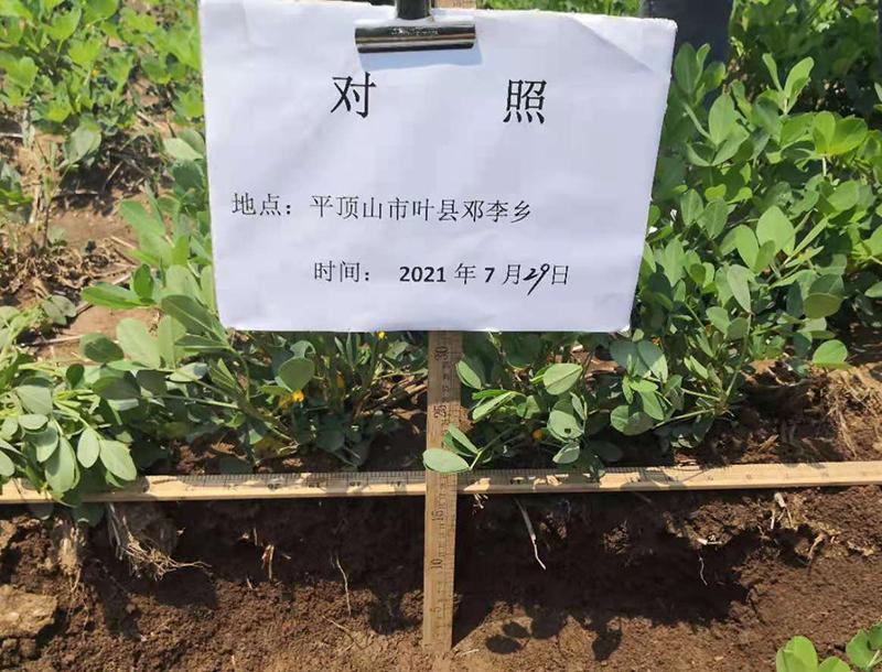 经济作物种植,离不开的,科学土壤培肥方法