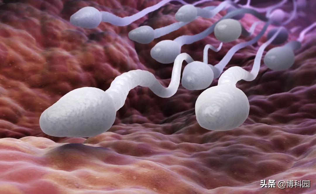 太空怀孕,你敢想吗?冷冻精子首次在微重力环境下存活